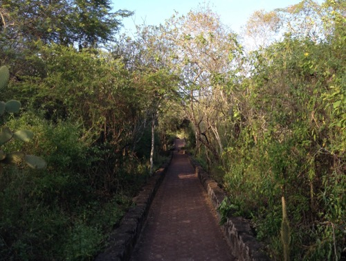 Running in Galapagos