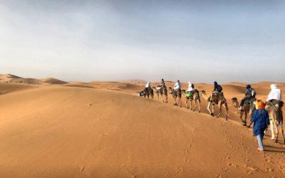 How to Plan a Camel Trek in the Sahara Desert of Morocco