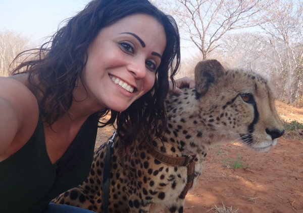 cheetah encounter